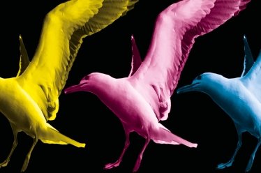Three seagulls, landing side-by-side, brightly coloured yellow, pink and blue against a black background